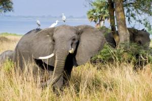 Adventure Holidays Wildlife Opt